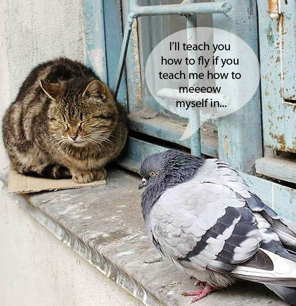 Image result for cats talking to birds