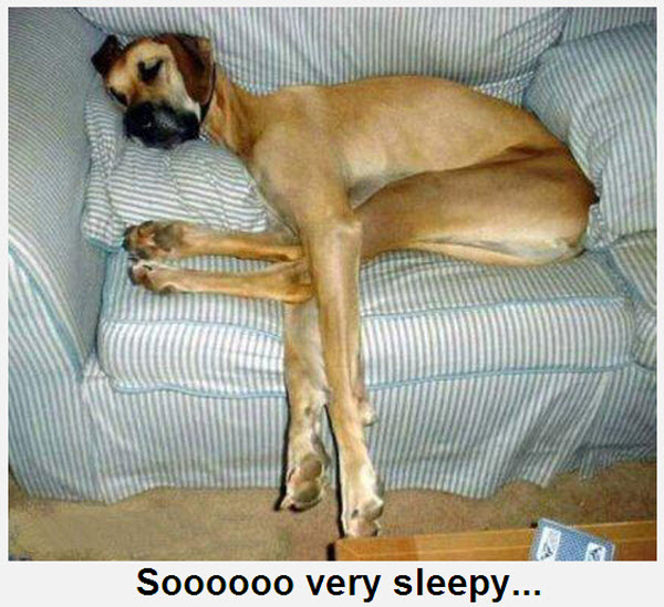 Big Dog Taking a Nap [funny photo] | Furry Talk