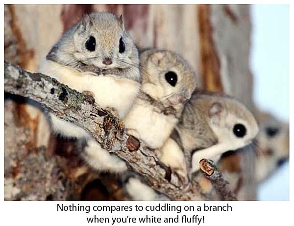 bichos lindos nas fotos mais fofas da internet e do ... |Cute Fluffy Talking Animals