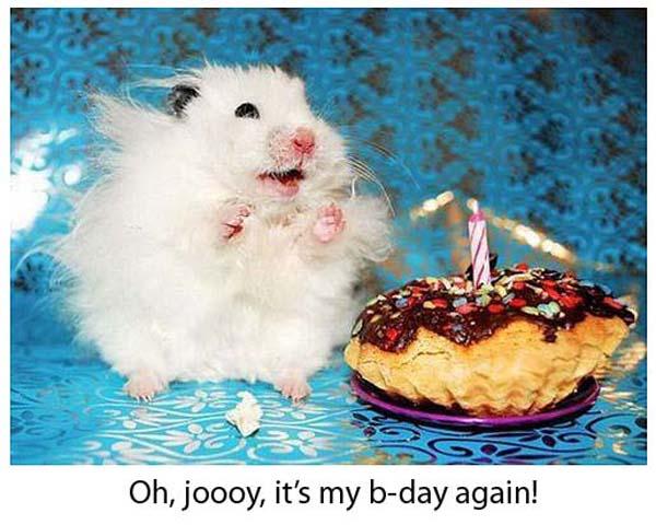 happy birthday animal funny - photo #39