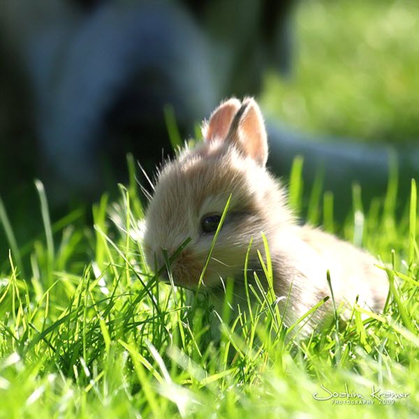 5 adorable and fluffy bunnies cute pictures furry talk