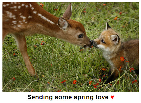 deer kissing fox