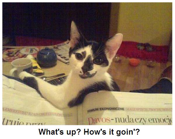 "Funny ""how's it going"" Cats [5 cute pictures]"
