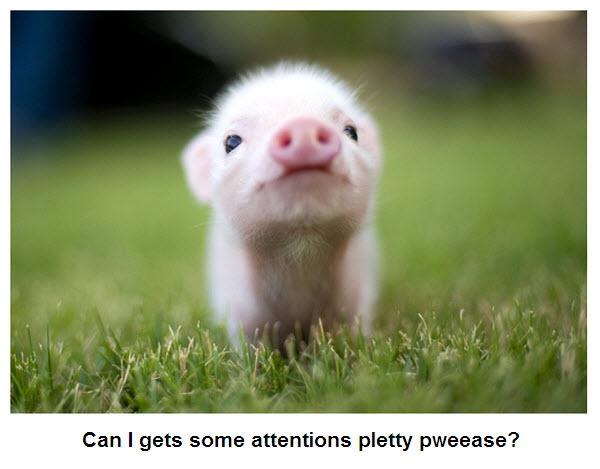 Worlds cutest piglet - photo#9