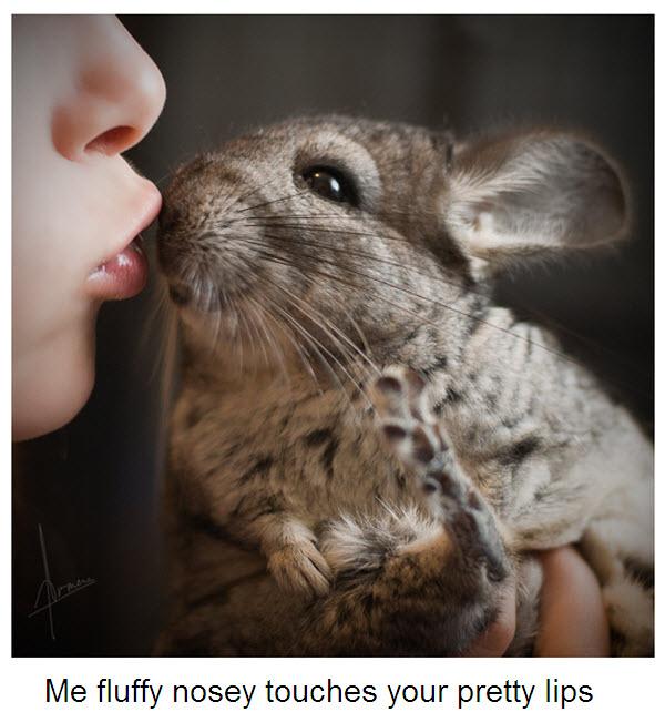 kiss cinc