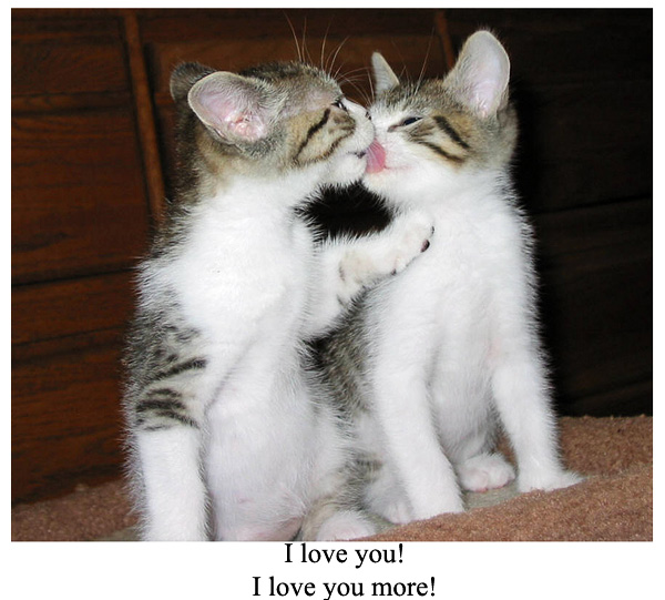 I love you more kitten