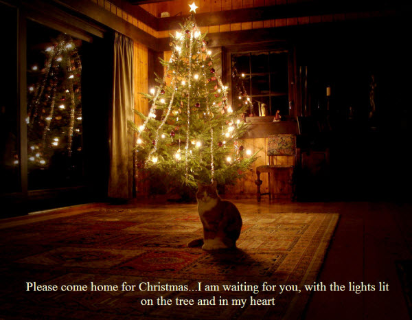 Come Home For Christmas.Please Come Home For Christmas Card Sad Cat Furry Talk