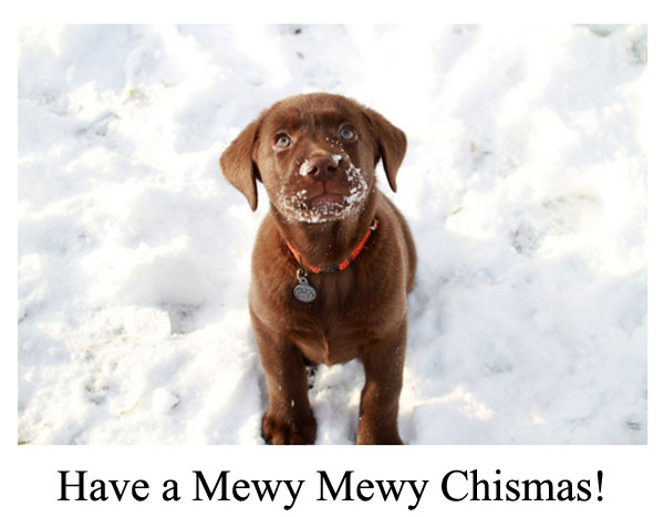 cute little brown dog merry christmas card