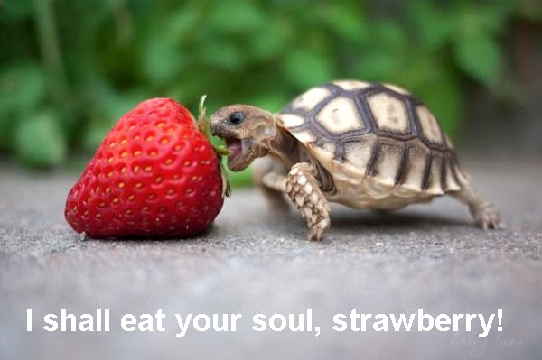 Dwarf Turtle Attacks Strawberry [funny photo]