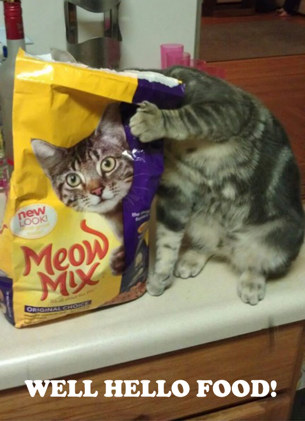 Funny Cat Behind Food Bag [lol photo]