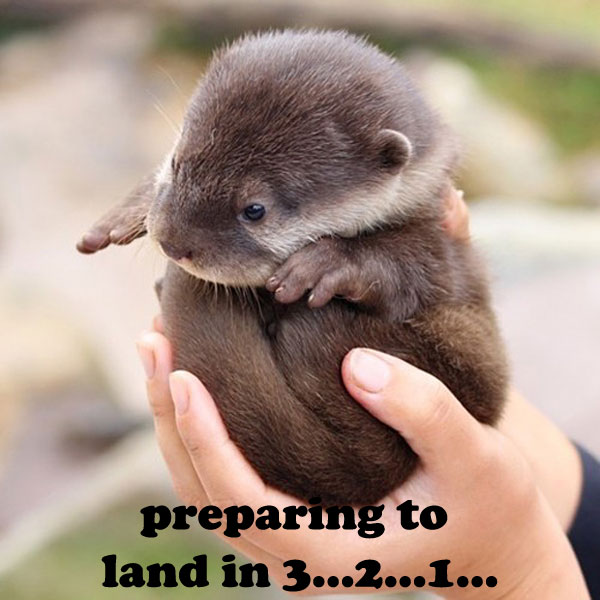 Cute Baby Otter Held in Palms [funny photo]
