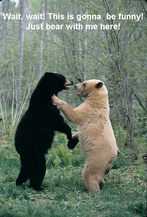 2 Bears Chit-Chatting [funny photo]