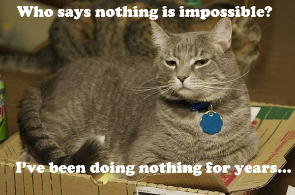 Nothing is Impossible - Cat Disagrees [funny photo]