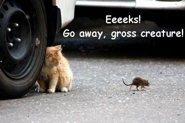 Kitty Scared of Baby Rat funny photo