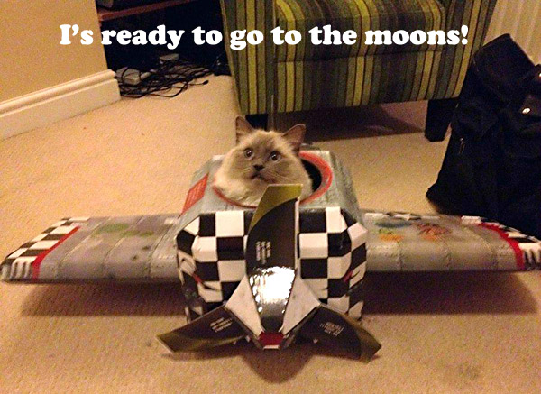 Going to the Moon [cute cat]
