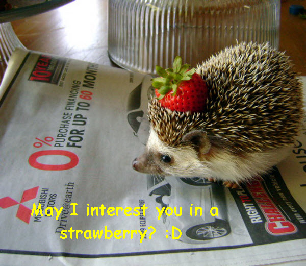 A Great Offer: Hedgehog and Strawberry [cute photo]