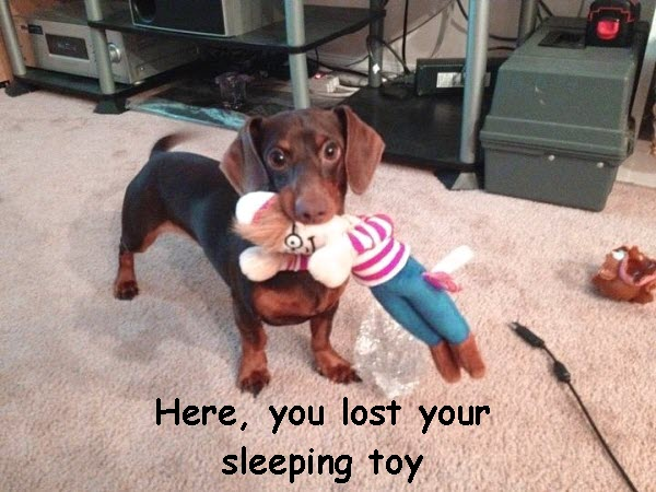 Cute Doggy Brings a Toy [sweet photo]