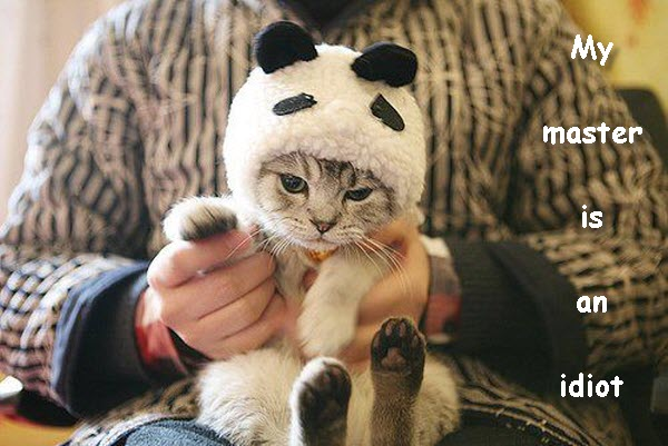 Angry Kitten in Costume [cute photo]