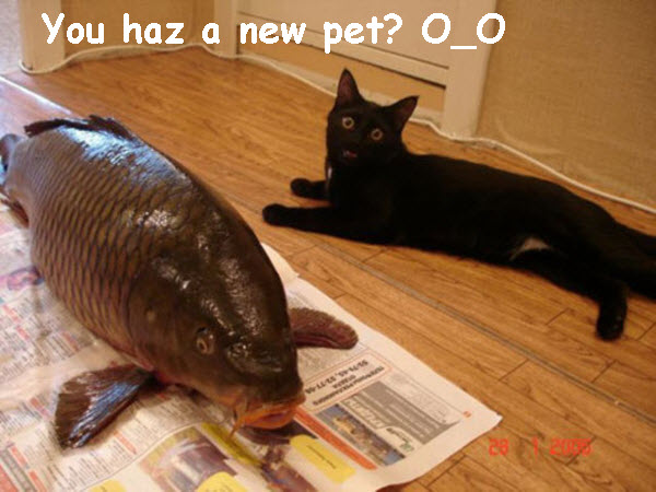 New Pet in the House [funny fish photo]