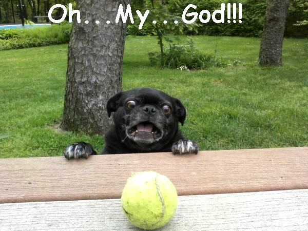 OMG Freaked Out Dog [funny photo]