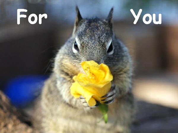 Squirrel Offers Yellow Flower [cute photo]
