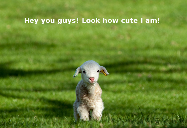 A White Little Lamb [cute photo]