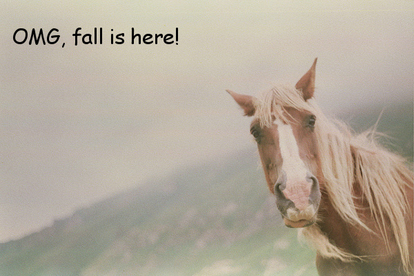 Autumn Has Arrived [horse photo]