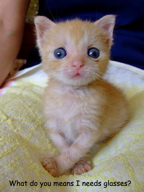 Kitten Needs Glasses [adorable photo]
