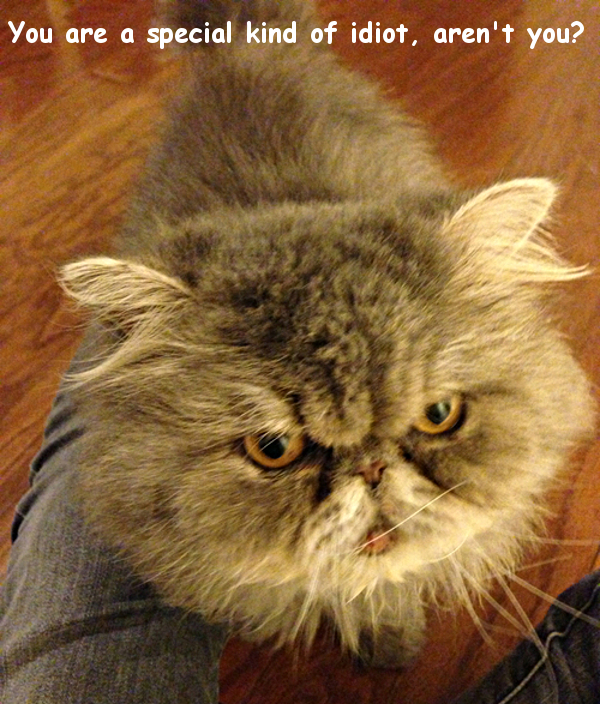 Grumpy Cat Makes You an Idiot [funny photo]
