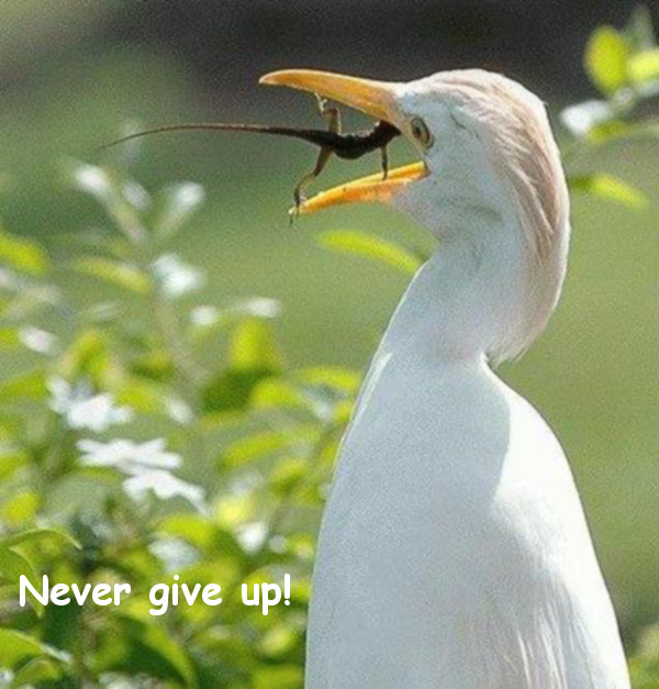 Never Give Up [bird and lizard photo]