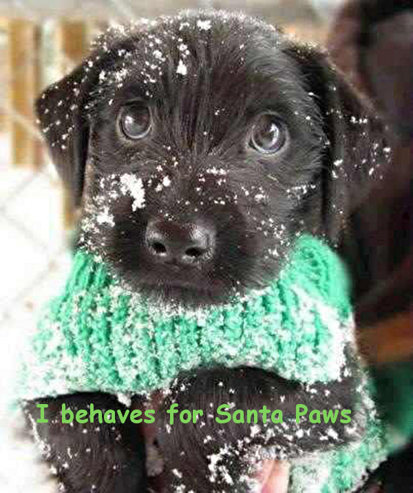 Santa Paws is on the Way [puppy photo]