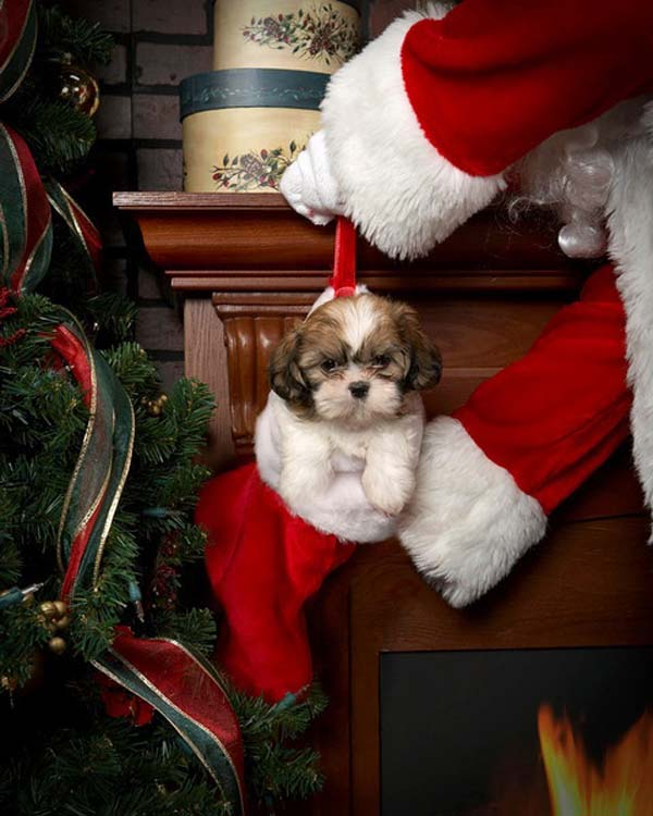 Merry Christmas Animals.10 Adorable Christmas Animals Beautiful Photography Furry Talk