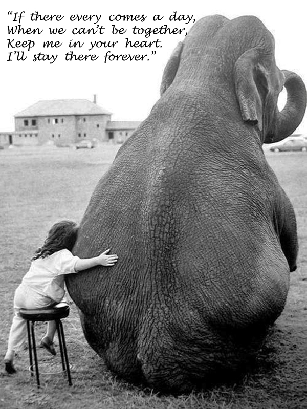 Friends For Ever [touching photo and quote]