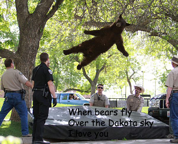Romantic Bear Poem [funny photo]