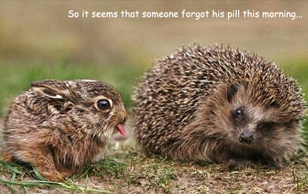 Odd and Funny Couple [hedgehog and rabbit]