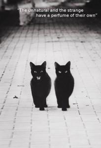 Black Cats Walking [photo]