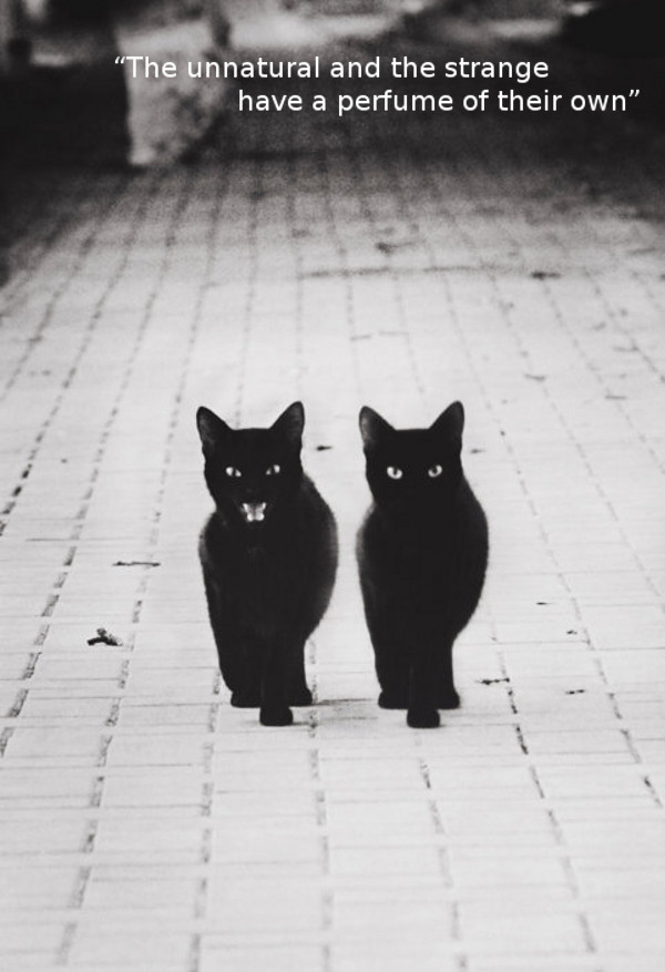 Black Cats Walking [photo] | Furry Talk