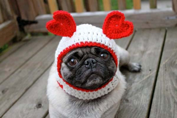 Valentine's Cute Animals [sweet pet photos]