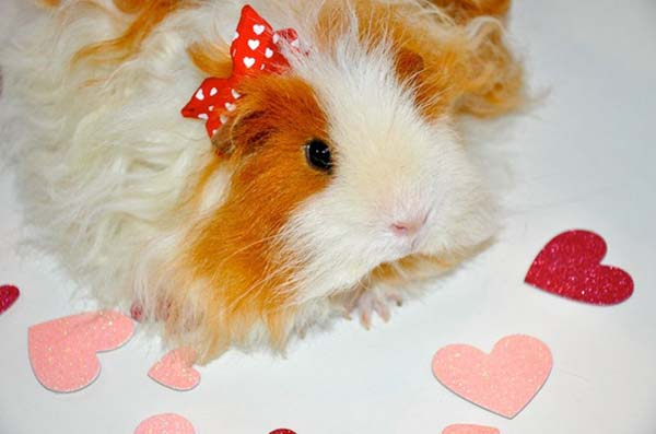 Valentine Animals Photos Valentine's Cute Animals