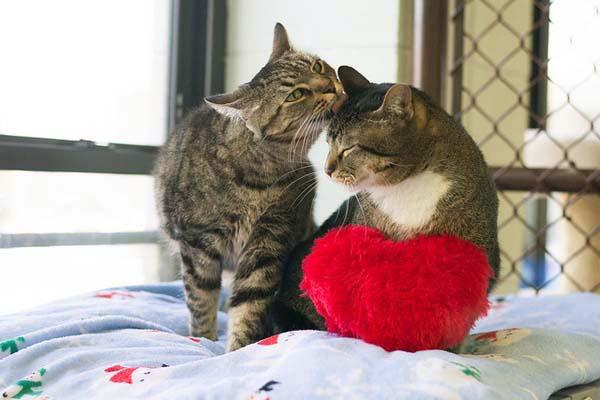 Valentine's Cute Animals [sweet pet photos]