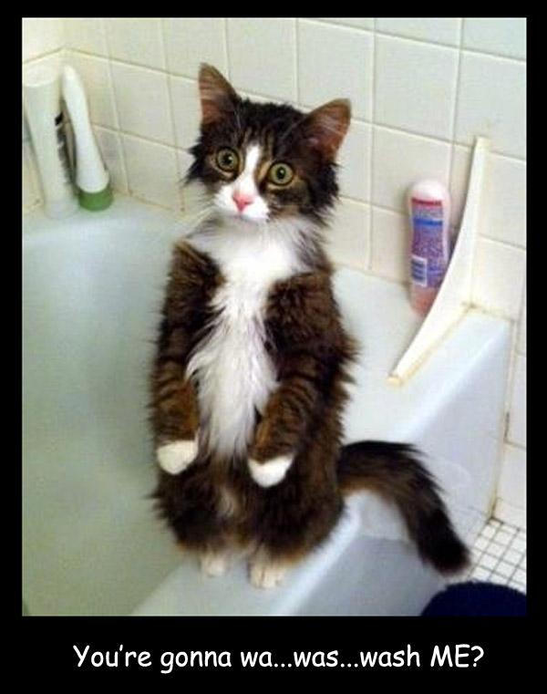 Shocked Cat [cute photo]