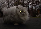 Fluffy Cat Annoyed [funny photo]