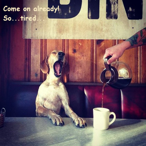 Morning Coffee is a Must [funny dog photo]