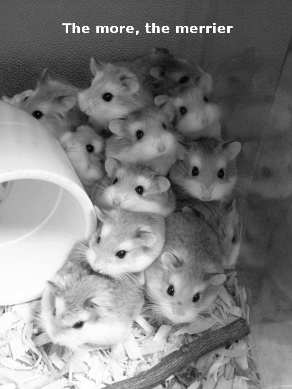 Hamster Pile [adorable photo]