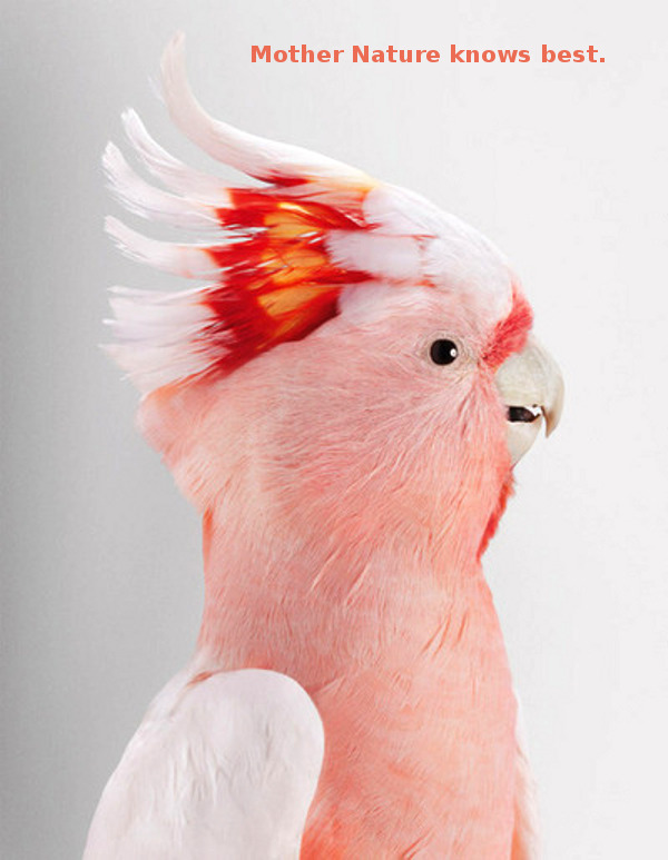 Handsome Pink Bird [photography]