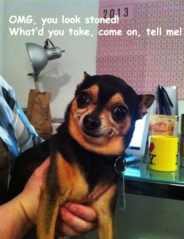 Hilarious small dog funny face photo furry talk hilarious small dog funny face photo voltagebd Gallery