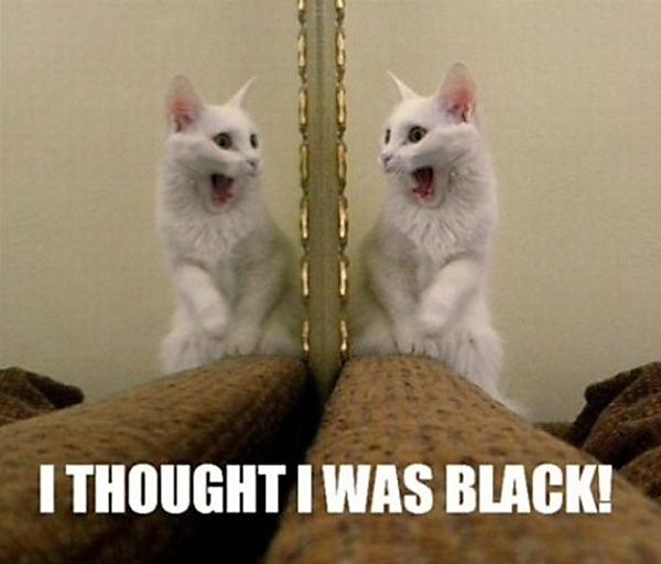 OMG Cat! You are White!!! [hilarious photo]