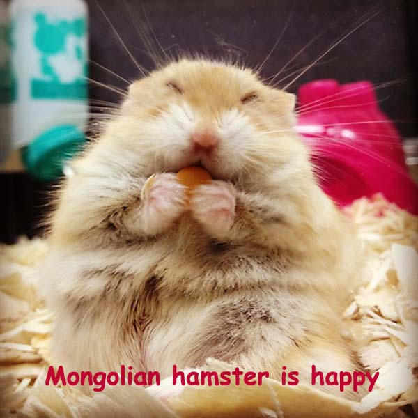 Funny Looking Hamster [cute photo]