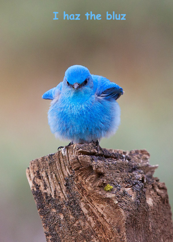 Cute Blue Bird [photography]