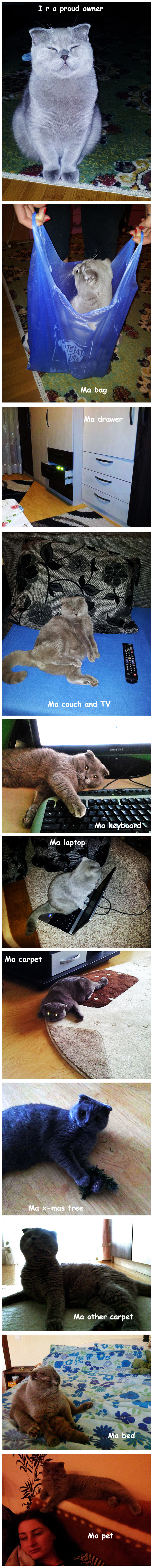 My Cat Charlie Owns Everything [photo collage]